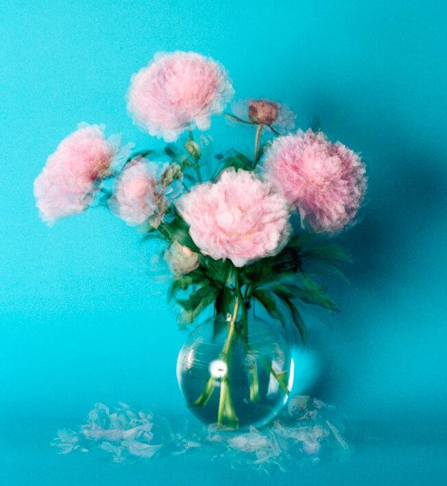 Still alive, Pivoines roses (3) par Hélène Marcoz